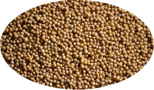 Senfkörner, gelb - 500g / Senfsaat gelb