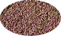 Erika Flowers / Heather Flowers - 100g