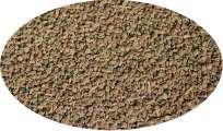 Selleriesaat ganz - 1kg Gewürze