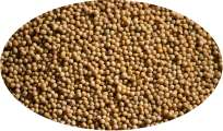 Yellow Mustardseed - 500g
